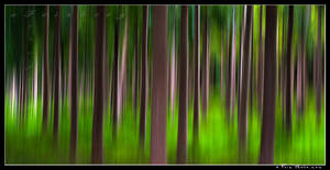 Forest Abstract series