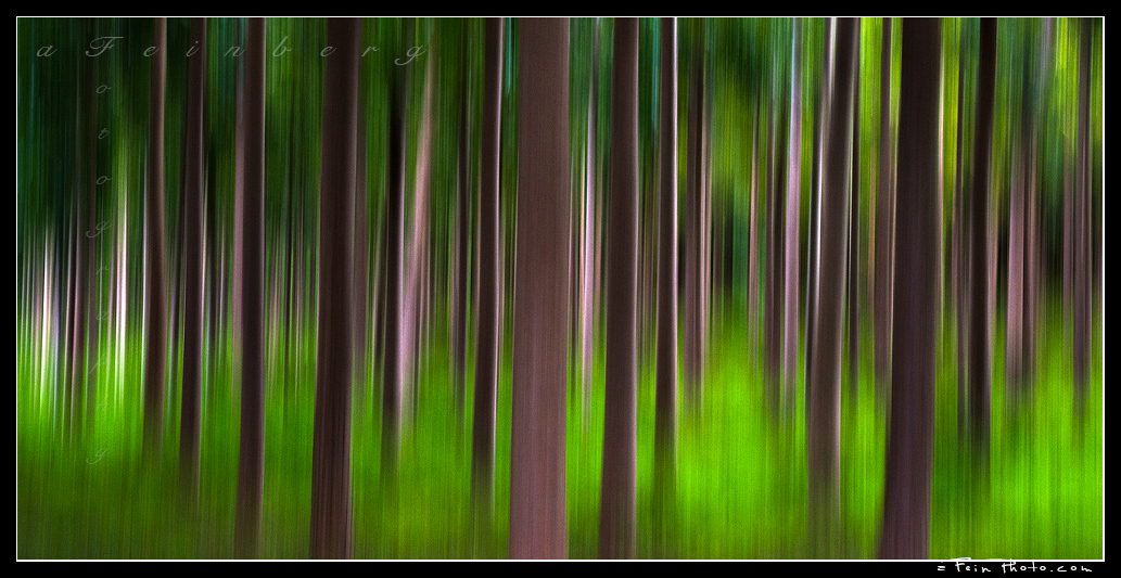 Forest Abstract series by aFeinPhoto-com