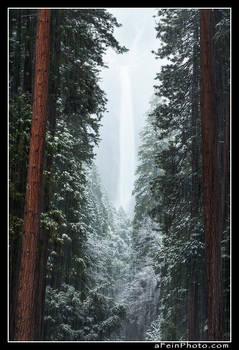 Whispers Of Yosemite