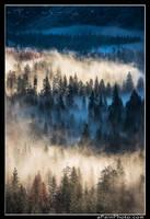 Yosemite Valley Fog I