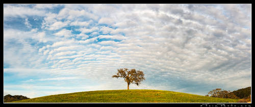 King Of The Hill by aFeinPhoto-com