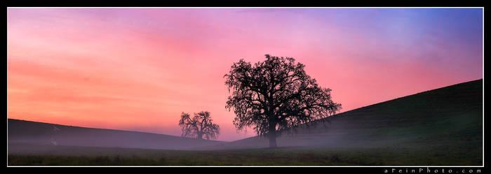 Woke Oak