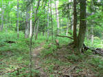 Bad Trail