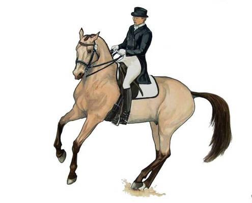 Oreon Buckskin Dressage Horse