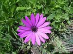 Purple Flower Stock