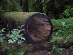 Hollow Log stock