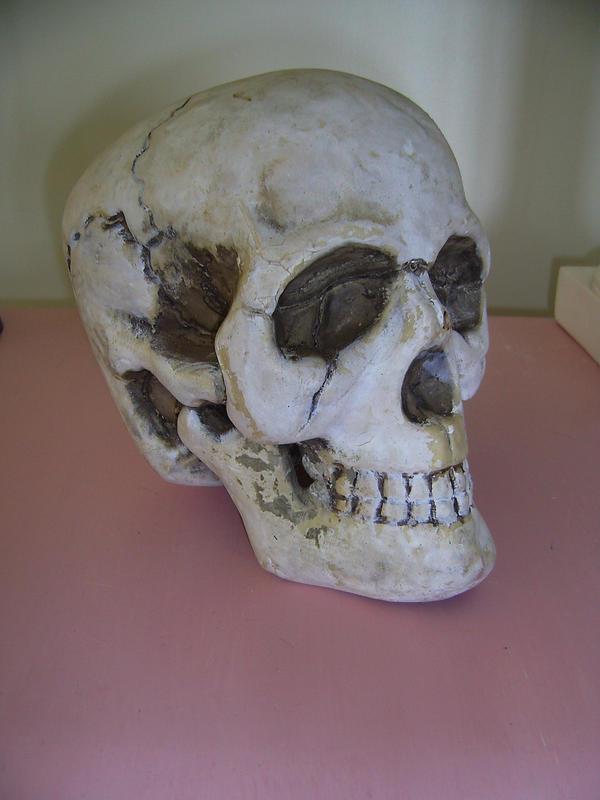 Skull 1 by chamberstock