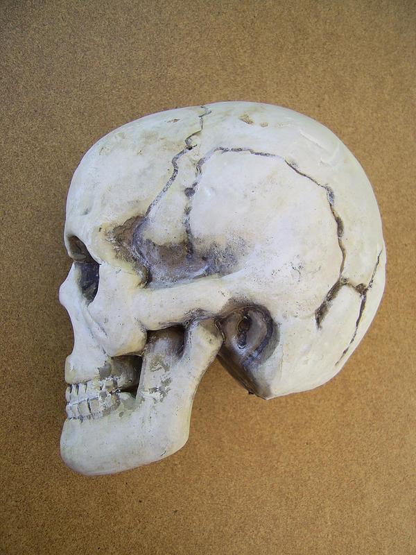 Skull 6 by chamberstock