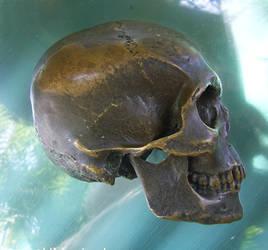Skull 7 by chamberstock