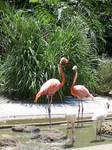 Flamingo Stock 2