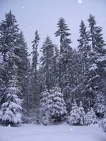 Winter Stock 3 by chamberstock