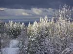 Winter Stock 23