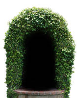 Leafy Arch stock by chamberstock