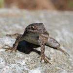 Lil Lizard Stock 14 by chamberstock