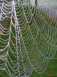 Spider Web Stock 1