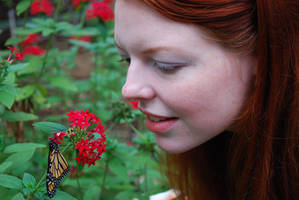 Monarch Butterfly Stock 13