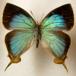 Butterfly Specimen 3