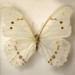 Butterfly Specimen 5