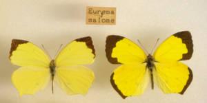 Butterfly Specimen 14 by chamberstock
