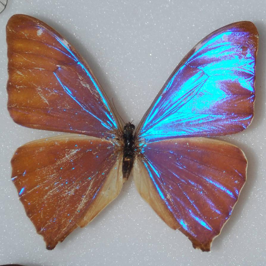 Butterfly Specimen 17 by chamberstock