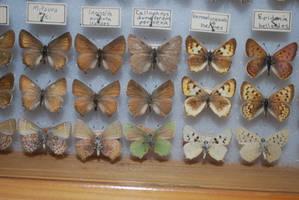 Butterfly Specimen 25 by chamberstock