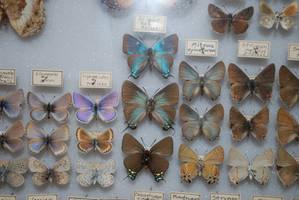 Butterfly Specimen 27 by chamberstock
