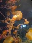 Aquarium Stock 3
