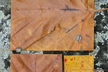 Geometric Autumn I