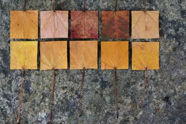 Geometric Autumn VIII