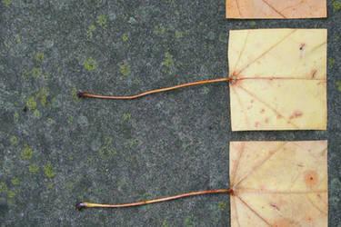 Geometric Autumn IX