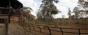 Giraffe sancturary