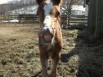 foal 09