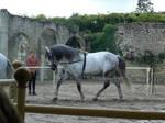 trick horse 04.