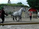 trick horse 09.