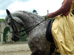 trick horse 12.