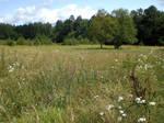 field 02.