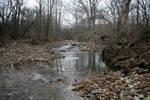 forest stream 01.