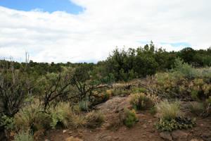 desert scrub 01. by greenleaf-stock