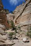 canyon 12.