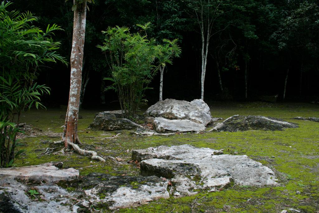 jungle 06.
