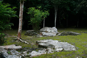 jungle 06. by greenleaf-stock