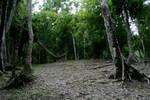 jungle 08.
