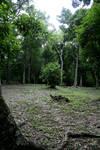 jungle 09.