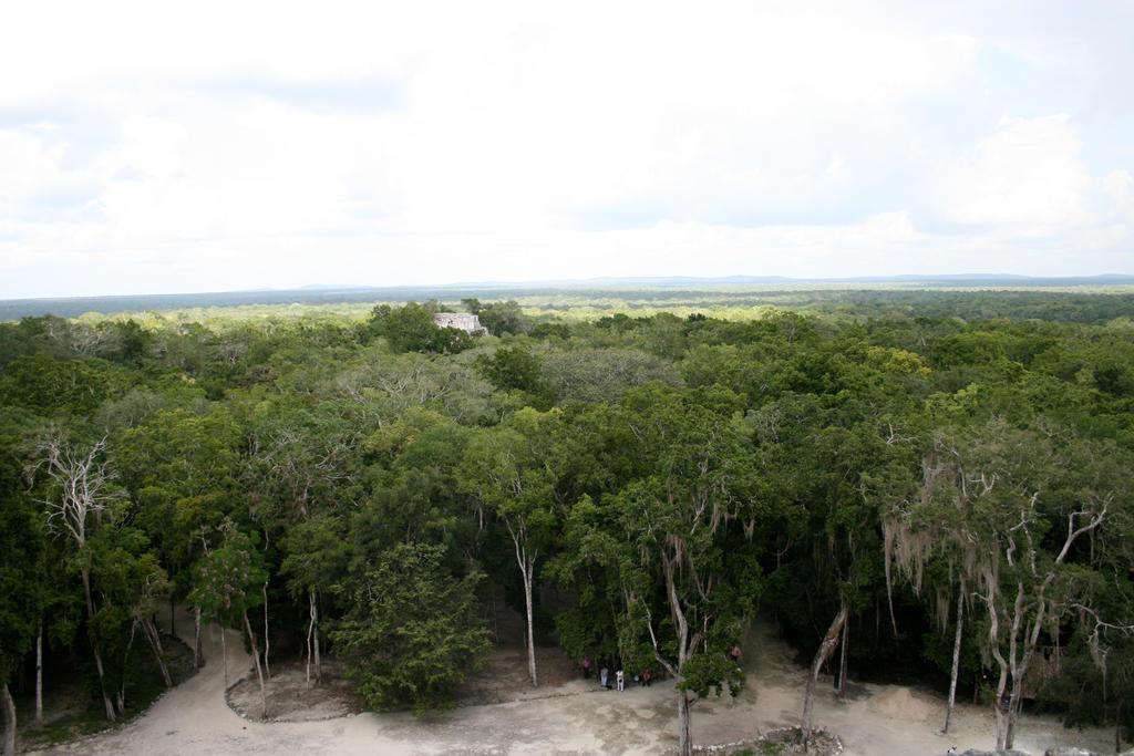 jungle view 01.