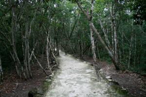 jungle path 01. by greenleaf-stock