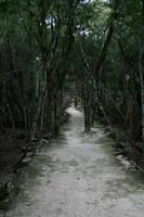 jungle path 02. by greenleaf-stock