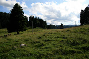 alpine meadow 08.