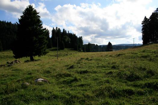 alpine meadow 08.