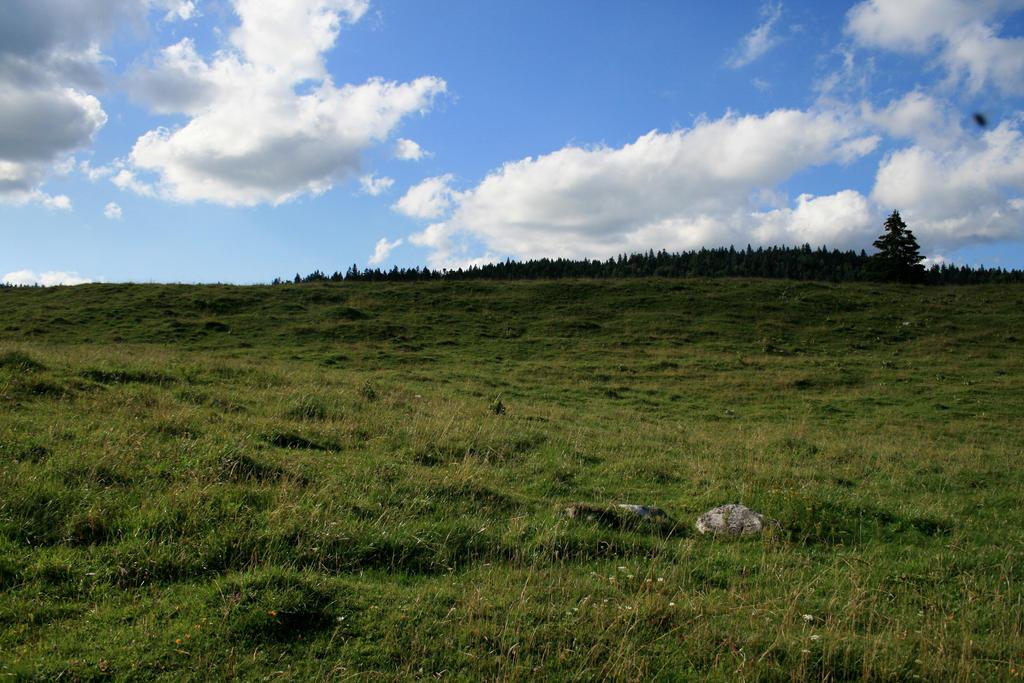 alpine meadow 09. by greenleaf-stock