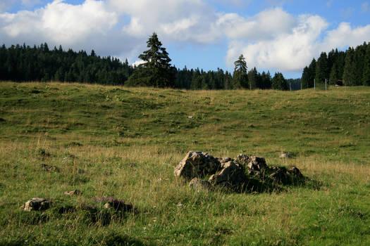 alpine meadow 10.